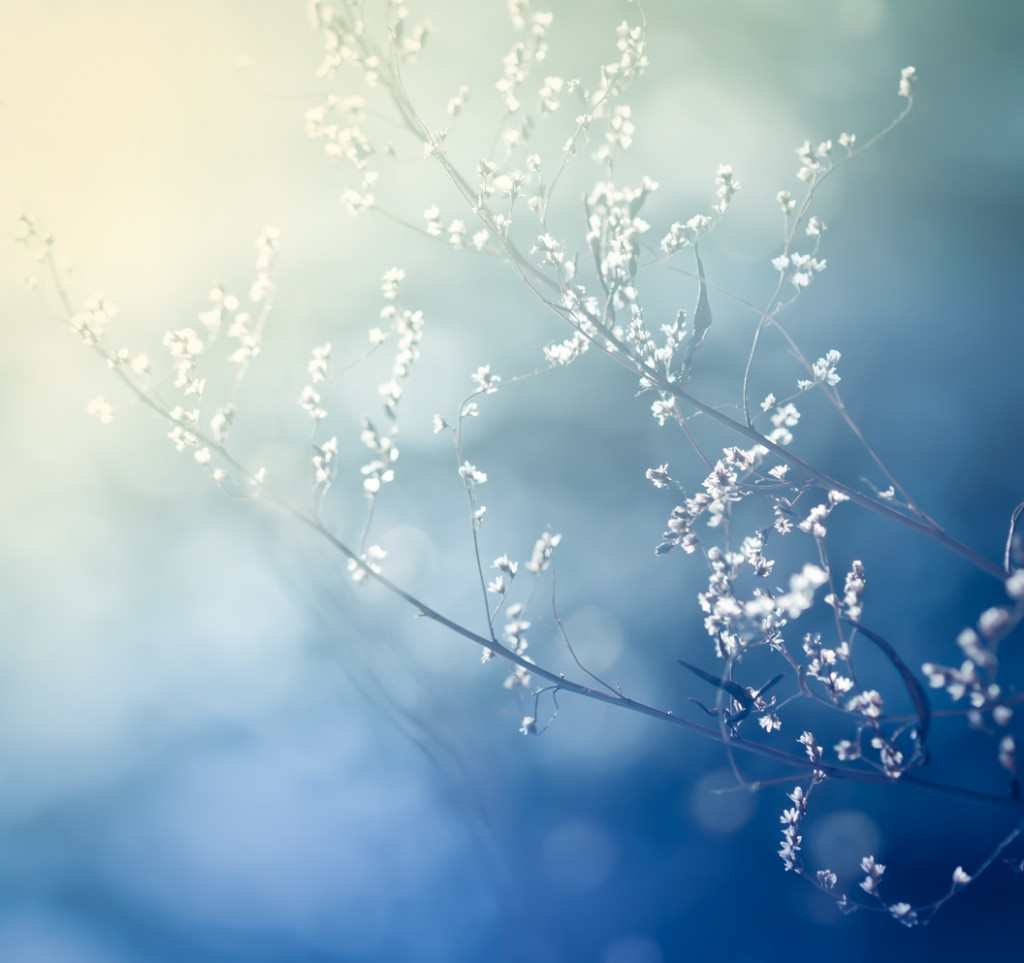 Delicate stem and flowers against abstract blue background