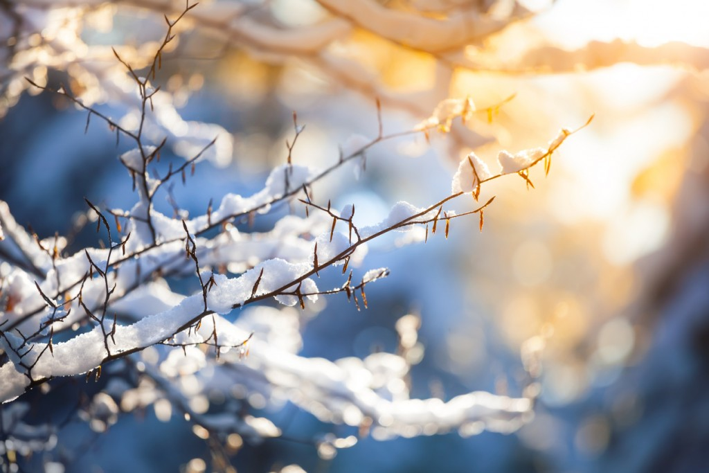 Snow on the Branch and Sunset - Winter Background