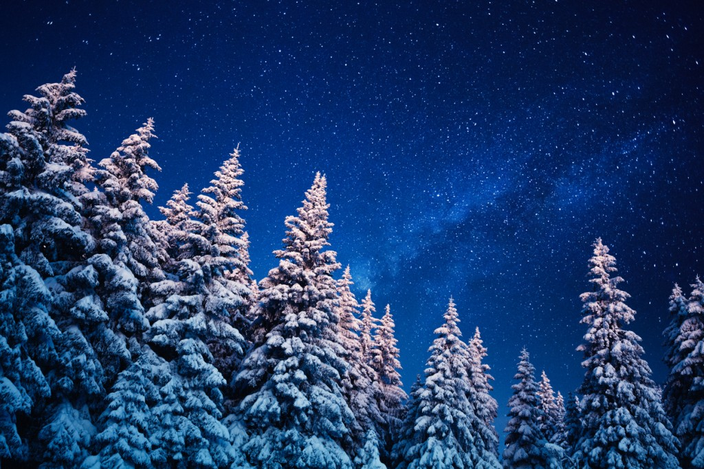 Idyllic snowy winter scene: snowcapped trees under the night sky with shining stars.