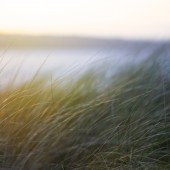 Summer sand dune grasses with sun flare at Gwithian beach in cornwall