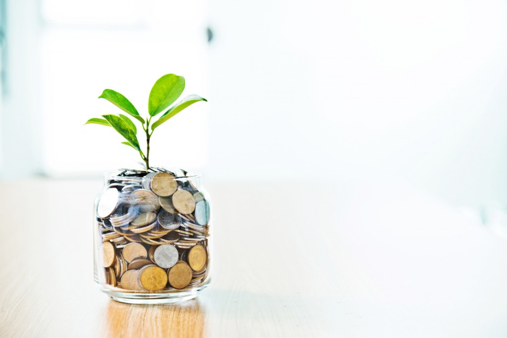 Young plant growing from coin jar