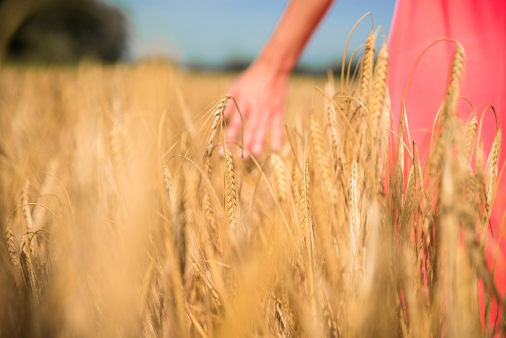 Close up photo of blurred woman's hand touching a yellow wheat in a field. She is wearing a red dress.