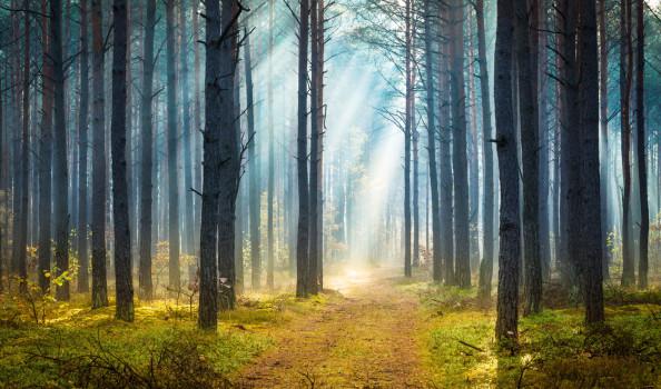 Misty autumn forest - Morning Sun Beams