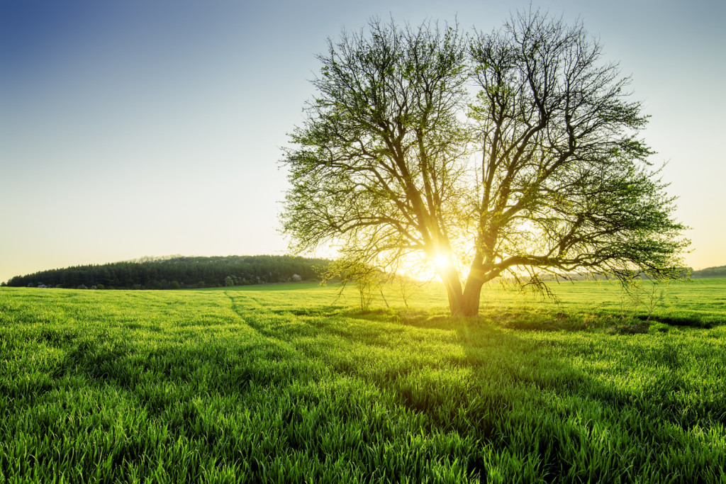 Beautiful rural scene of dewy spring field on sunrise
