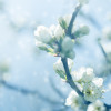 plum blossoms against defocused background with copy space