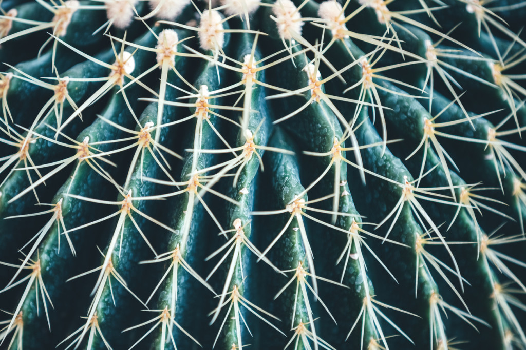 Close-up of round cactus.