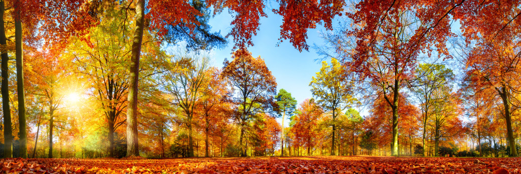 Colorful forest panorama in autumn