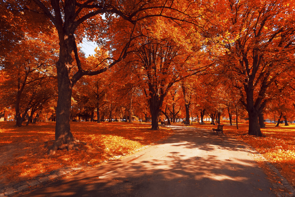 Autumn landscape of trees and leafs.