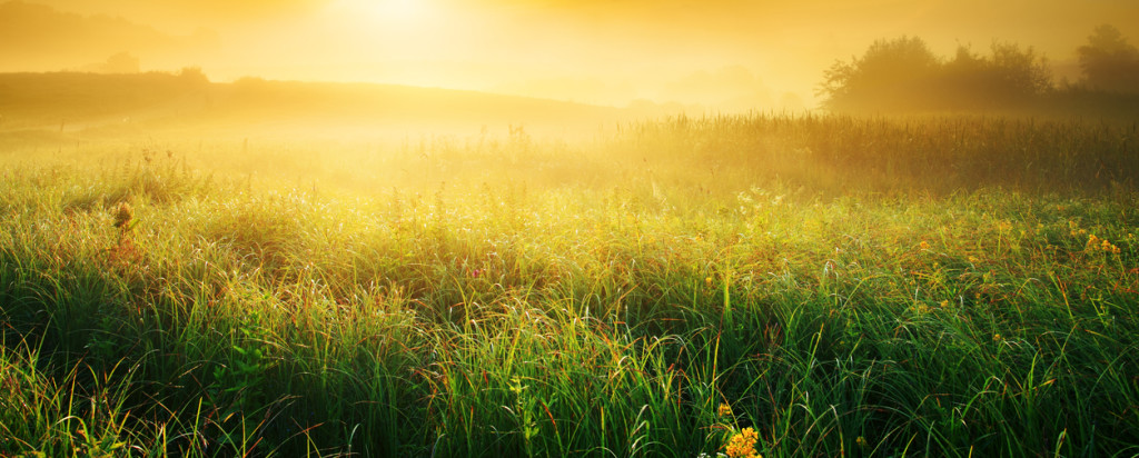 Colorful and Foggy Sunrise over Grassy Meadow - Landscape
