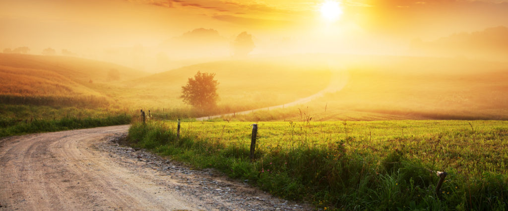 Winding Farm Road through Foggy Landscape - fields, meadow, sun during sunrise