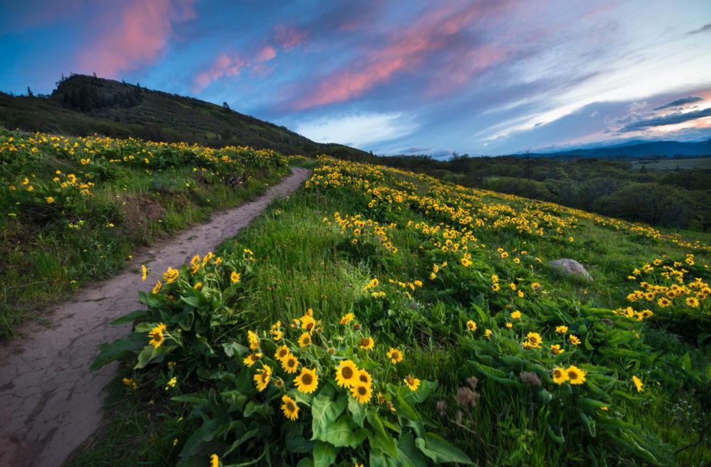 Sunset, USA, Columbia River Gorge, Blossom, Flower