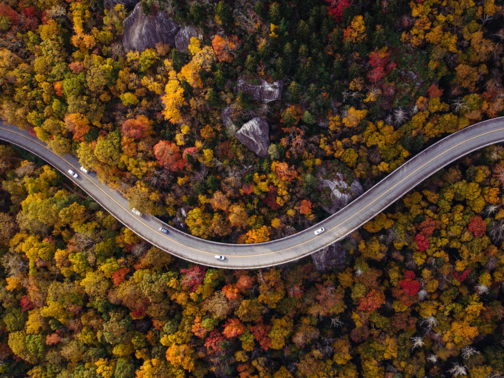 Road through forest with cars