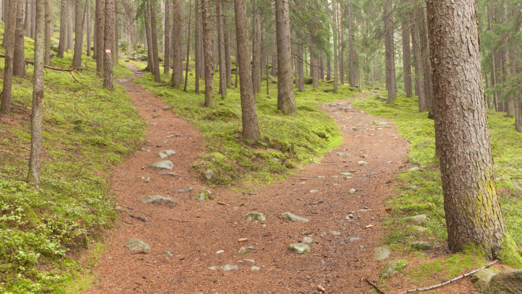single alpine path splits in two different directions.