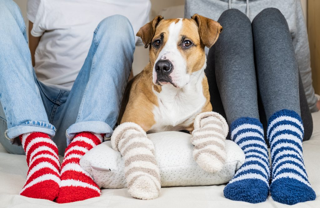 Dog with family wearing socks