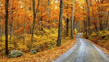 country road lined with autumn colored leaves