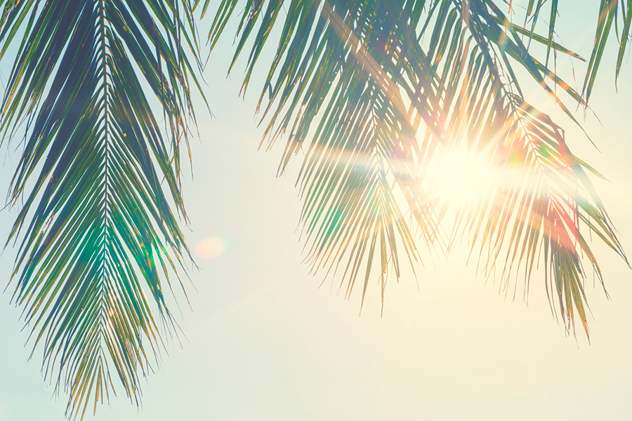 Sun shining through a palm tree