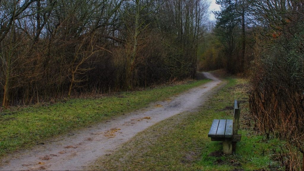 Wooden park with park trail passing a park bench and leading into the woods.