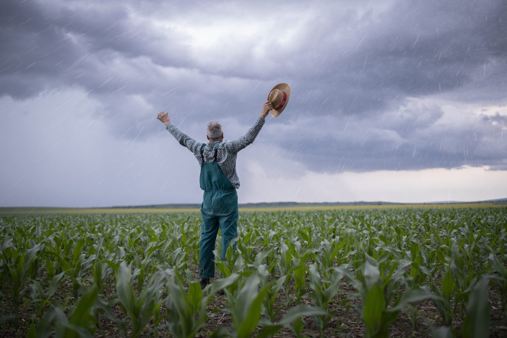 Full length of senior farmer in corn agriculture fields, arms raised and feeling happy because of rain after after drought.